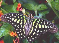 Butterflies Screensaver obchodní licence