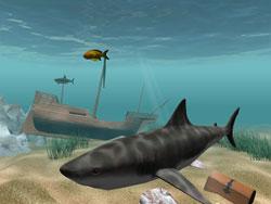 shark_shot1.jpg